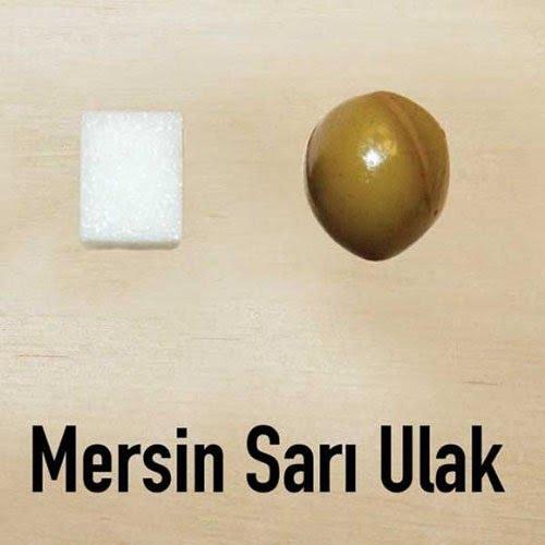 turkiyenin-en-iyi-zeytinleri-24747-11g_1703f806-e50e-4d83-90c2-2fe8ccc7795a